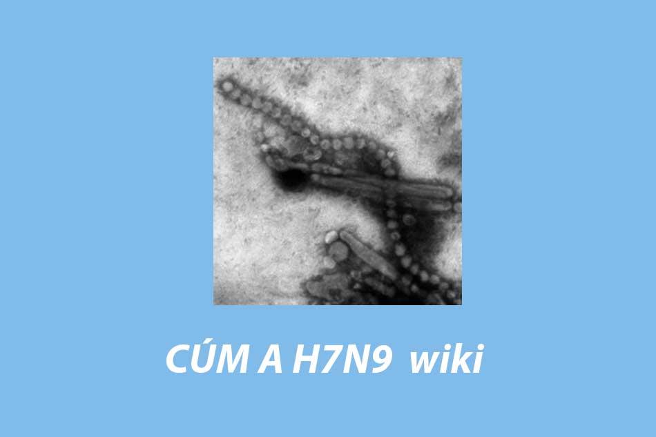 Hình ảnh H7N9 wiki
