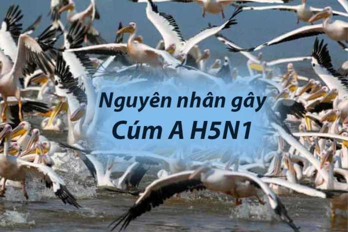Nguyên nhân gây bệnh cúm A H5N1