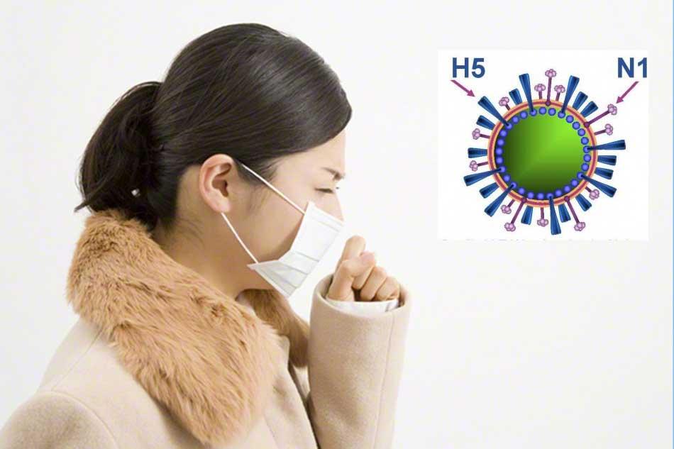 Xử trí ra sao khi có dấu hiệu bị nhiễm cúm A H5N1?
