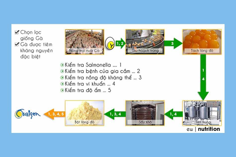 Quy trình sản xuất IgY