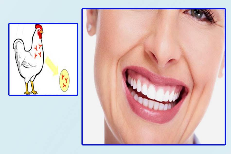 Kháng thể IgYkhiến bạn có một nụ cười sáng bóng, tự tin. (Ảnh minh họa)